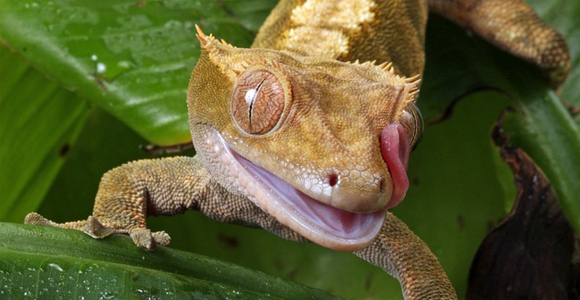 exotic reptile pets
