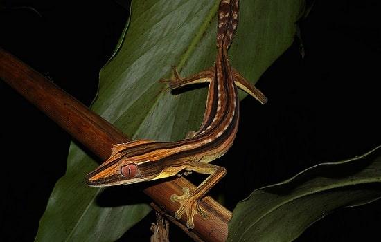 gecko queue de feuille à ligne