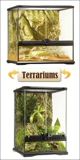 terrariums à vendre