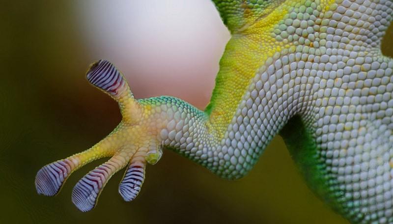 Informations générales sur le gecko