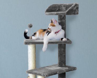 avantages arbre à chat