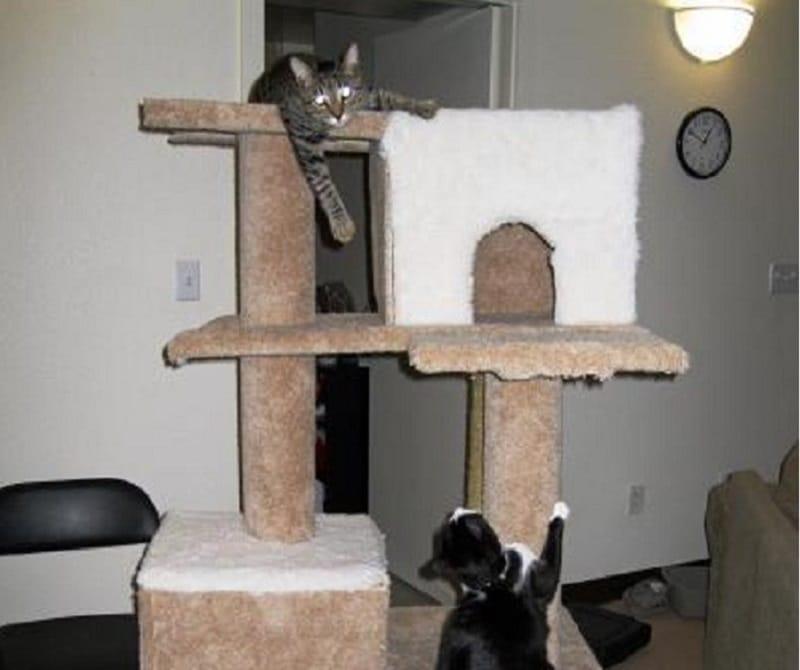 comment construire un arbre à chat