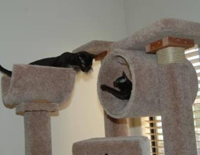 fabriquer un arbre à chat