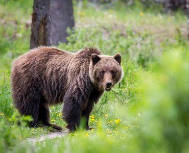 préserver la nature et les animaux
