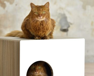 meuble à chat