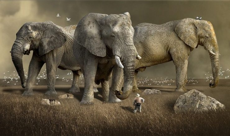 braconnage éléphants