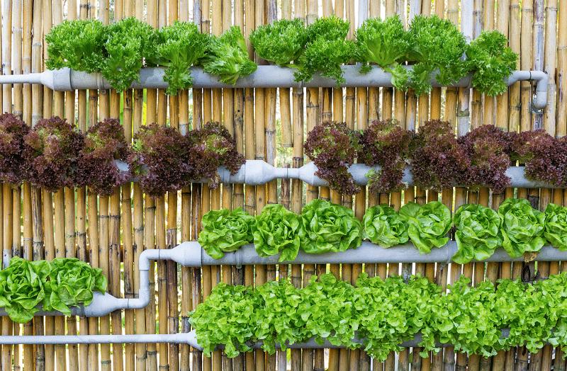 mur de salades