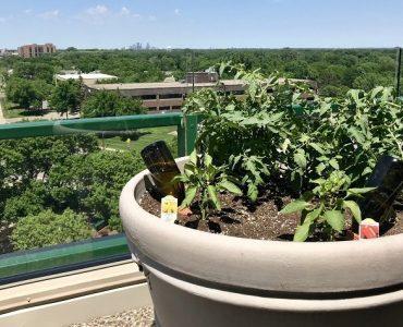 potager durable sur terrasse