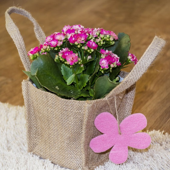 offrir une plante