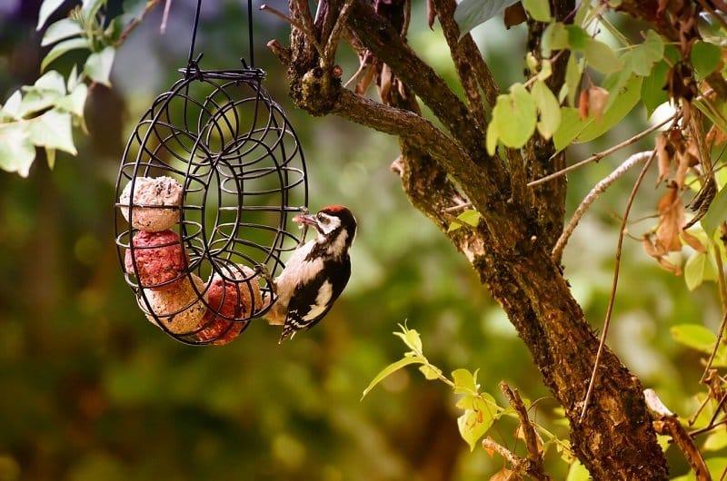 attirer oiseau jardin