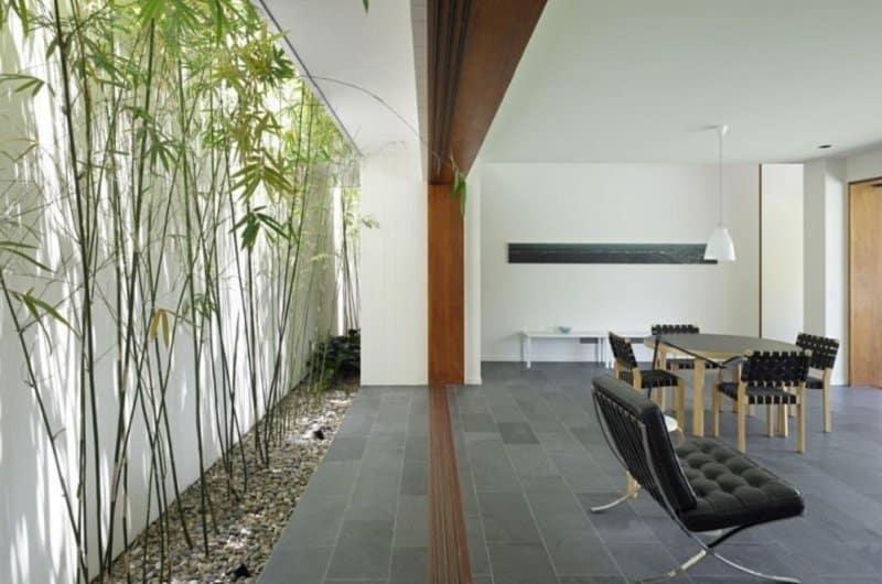 mur de bambou vivant