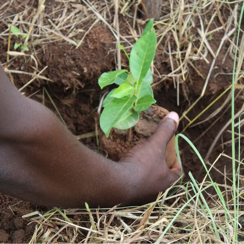 offrir un cadeau écologique