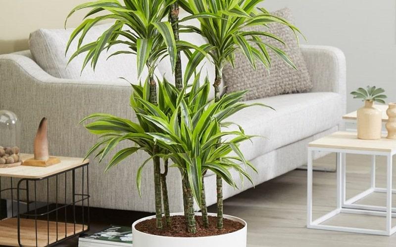 meilleure plante qui purifie l'air
