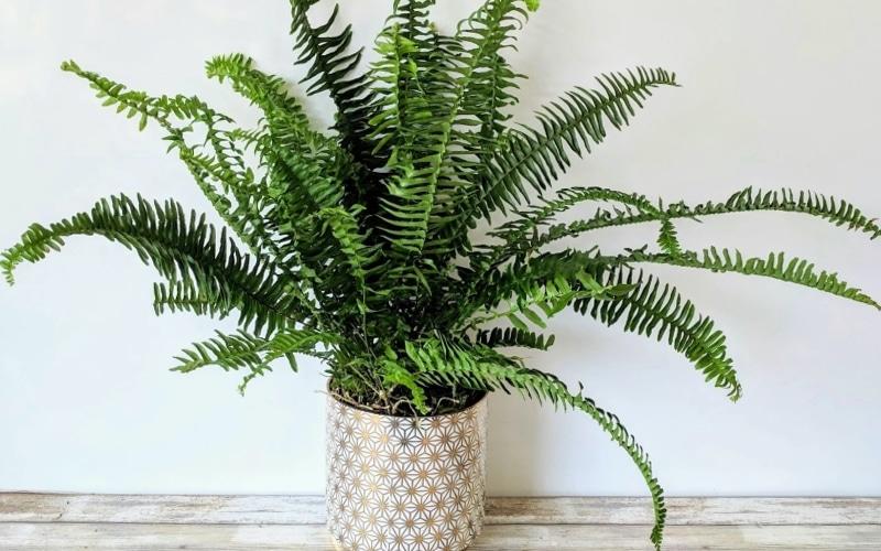plantes qui purifient
