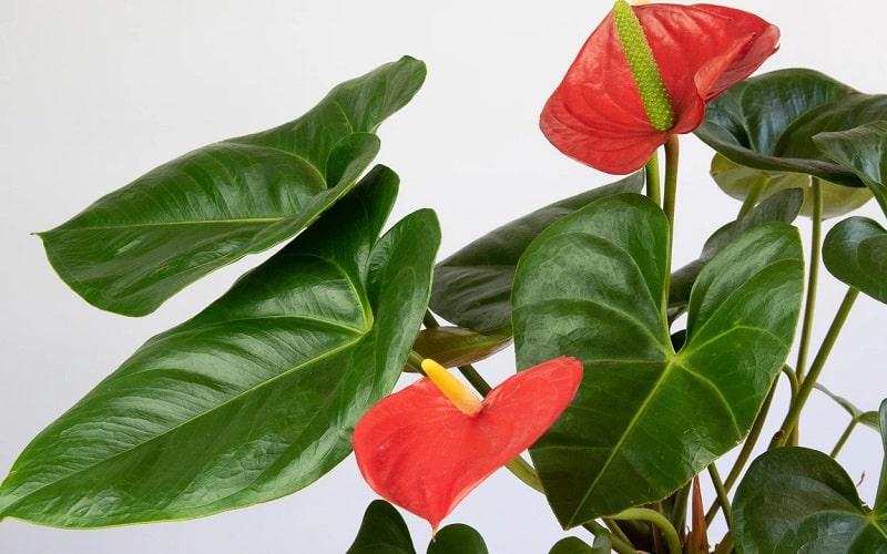 meilleures plantes detox