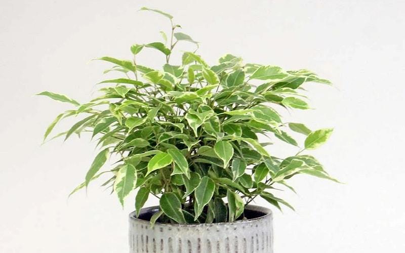 plantes pour détoxifier