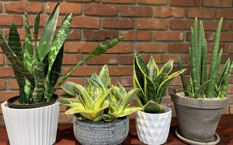 plantes pour purifier