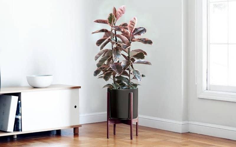 plantes pour détoxifier l'air