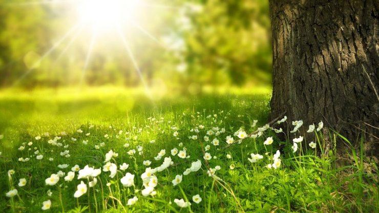 Qu'est-ce que l'écologie profonde